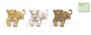 Lion cub adoptables - OPEN. by Moonticore