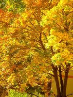 Stock 149: autumn leaves by AlzirrSwanheartStock