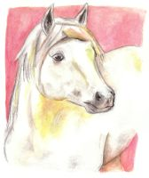Horse 23 by Paintwick