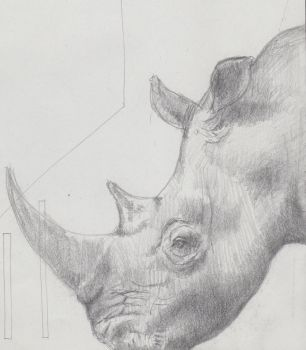Rhino quick sketch by Skymat