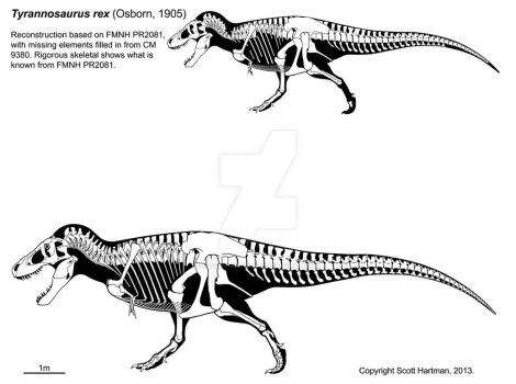 A T. rex named Sue 3.0 by ScottHartman