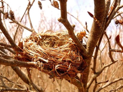 Empty Nest by cocobolo