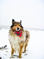 me likes the snow by hermio