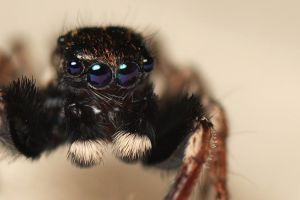 Blue-eyed jumper - Close crop by bredli84
