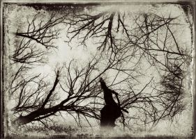 Veins by Coffea