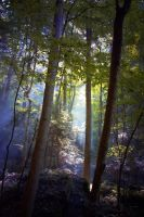 Forest Shadows by Resistere-inutile-es