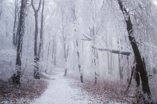 Winter Wonderland VI. by realityDream