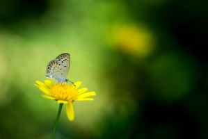 yellow flower with butterfly by berryrika