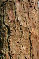 Tree Bark X by witchfinder-stock