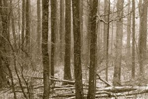 Snowfall in the Dying Woods by Psyartista9