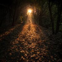 Let the Light Guide You by gilderic