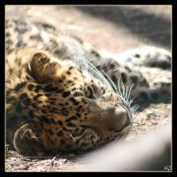 Leopard 8 by Globaludodesign