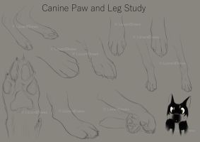 Canine Paw and Leg Study by LizzardDraws