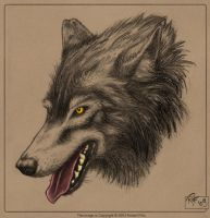 Lifestudy - Wolf by RobertFriis