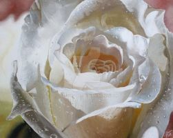 White Rose by CeltiaArt
