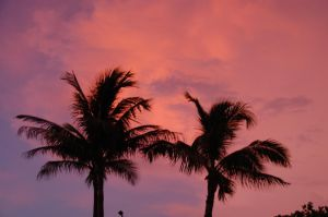 Palm Sunset 3 by Lauren-Lee