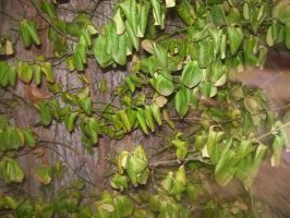 leaves-very interesting leaves by piratehippy