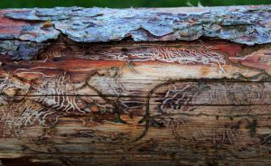 Natures Wood Carving by boogster11