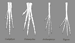 Theropod Foot Comparison by EWilloughby