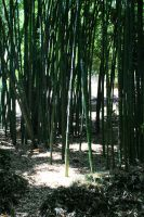Green Bamboo Forest by OffDWallNotDRack