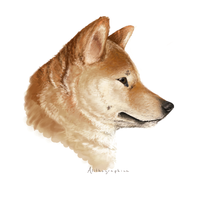 Shiba inu by Alithographica