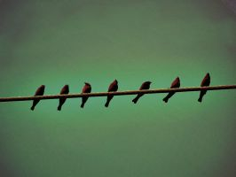Birds on a Wire 2 by magicalavatarian