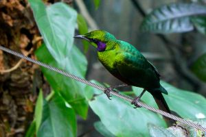 Emerald Starling by AngelaRizza
