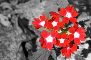 red flowers by theatregleek