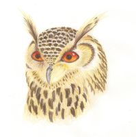 Woody the Owl by SonARTic
