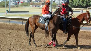 Racehorse Stock 58 by Rejects-Stock