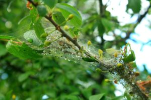 web after rain by Criosdan