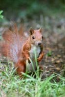 Berlin Squirrel1 by Yoonett
