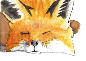Fox Watercolor by caseycole11