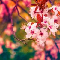 Blossom II by FlabnBone