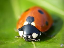 First Ladybug 2010 by IndianRain