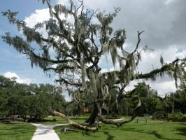 New Orleans City Park 08 by nevertakemystock