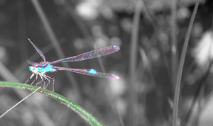 Glowy Dragonfly by Ehryn