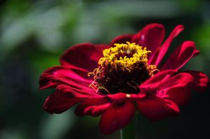 Morning flower by marialivia16