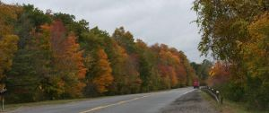 Maple Road by Nirr