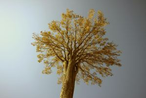 YellowTree by Imagitone