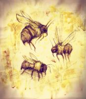 Honey Bees by Friendermen