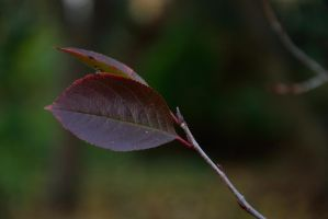 Leaf 2 by Risandell