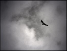 Fly Away by Dicotomy