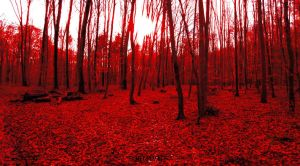 Blood Forest by Cruzio