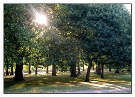 In Green Park by lovingenglish