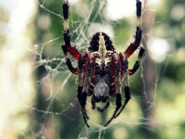 Arachnid III by BloodyMinded6