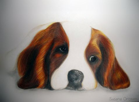 Puppy Love by Suzsiie