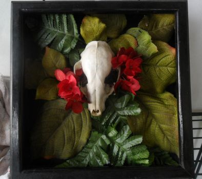 Raccoon Skull Shadow Box by ann3tt3