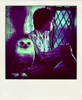 Rest in peace Hedwig by x--photographygirl
