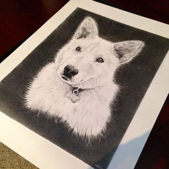 WIP Dog Drawing by andrewlglass